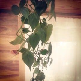 tiny house plants