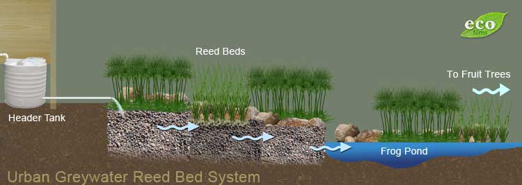permaculture Greywater Reedbed pond filatration